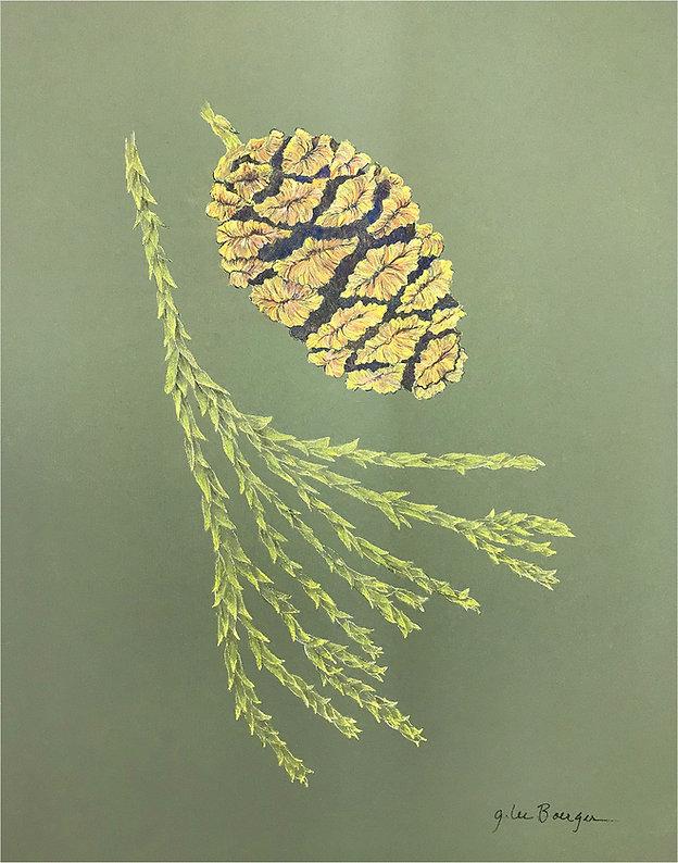 Boerger, G Lee - Sequoiadendron giganteu