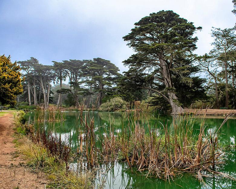 Watkins, James_Monterey cypress at Metso