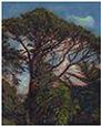 15-Sakatani.Ken.StowLakeGGPark.Pinus rad