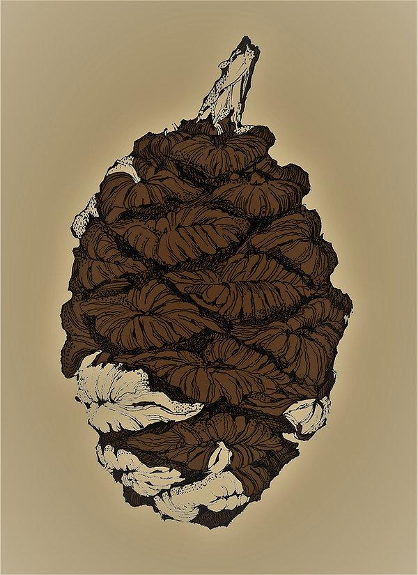 Lorenzen, Karl - Giant Sequoia Cone   2.