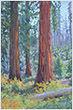 31-Perloff, Erika-Giant Sequoia.jpg