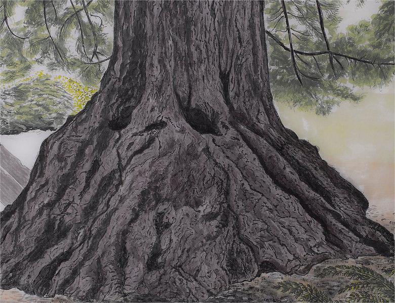 Bancel, Marilyn - Centennial Redwood.jpg