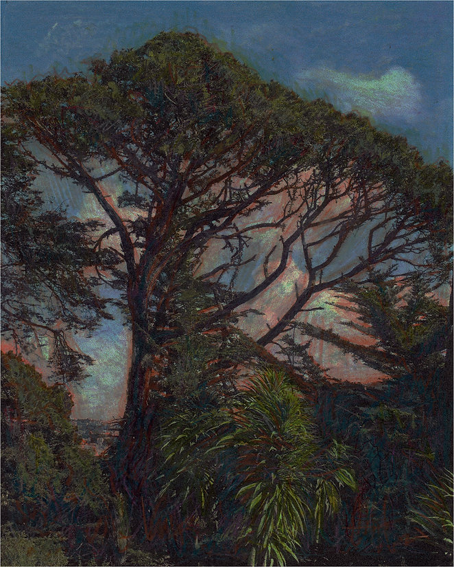 Sakatani.Ken.StowLakeGGPark.Pinus radiat