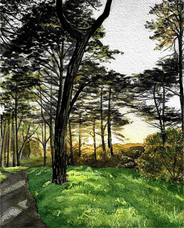Sellergren-Katie_Monterey Cypress.jpg