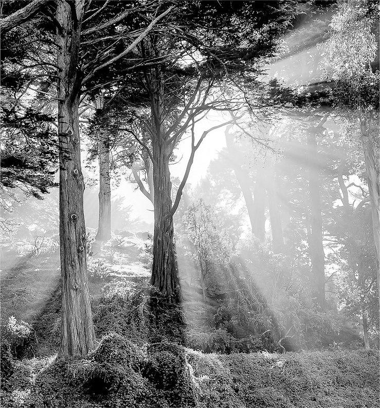 Morago, Daniel - Strawberry Hill Morning