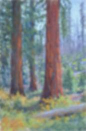 Perloff, Erika-Giant Sequoia.jpg