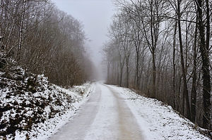 snow-covered-road-between-bare-trees-377