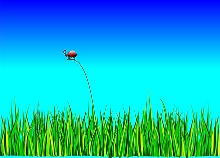 ladybug-158326_1280.png