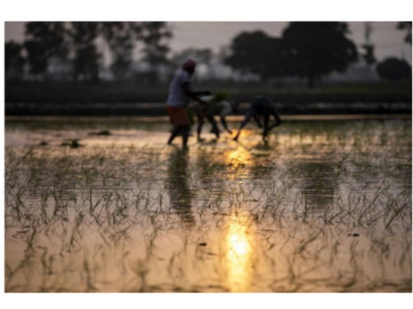 THE ATROCITIES OF FARM BILL CAUSING DISTRESS IN THE INDIAN FARMER'S MARKET