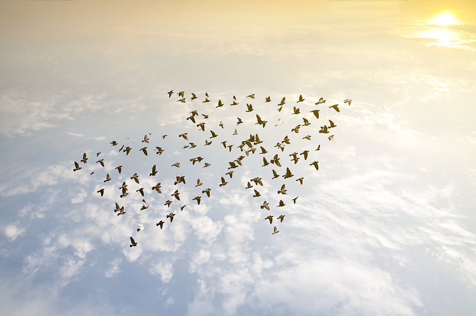 Crowd of birds flying on sky arrow shape