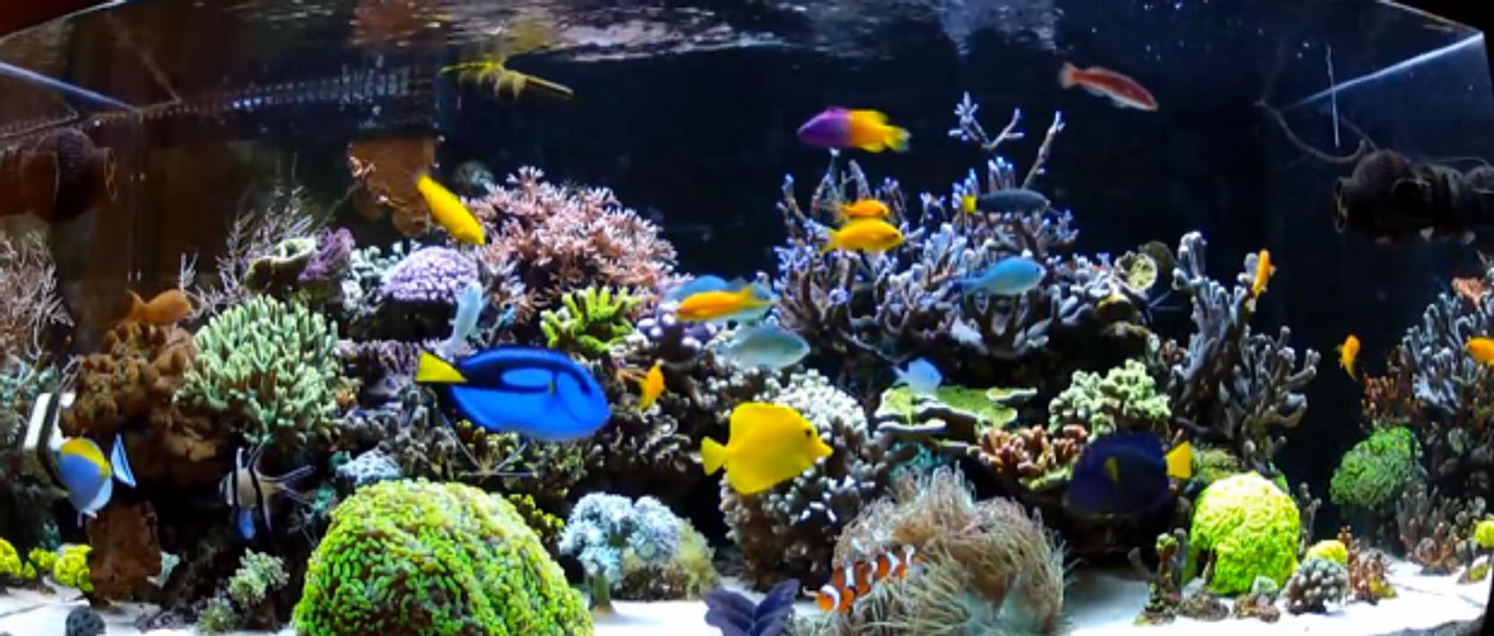 Okeechobee feed for Beginner saltwater fish