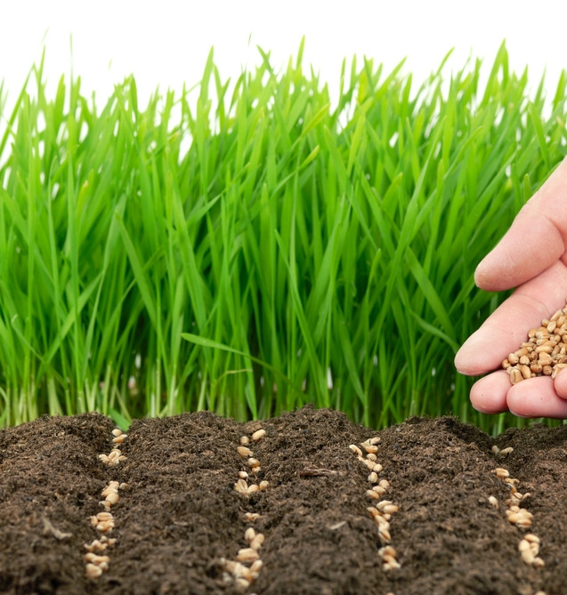 vegetable-garden-seeds-vegetable-garden-