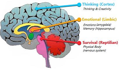 brain final.png