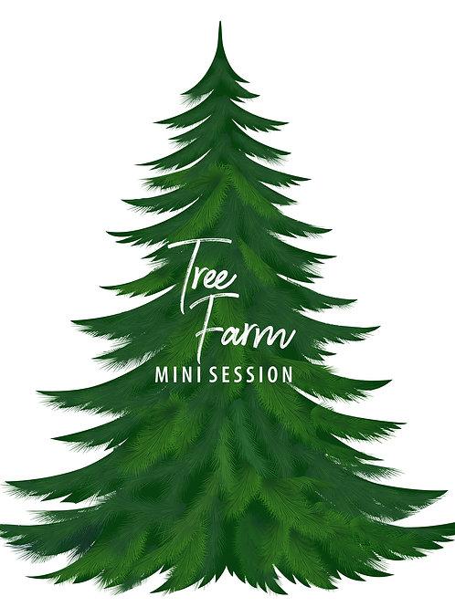 Tree Farm Mini- 11.16 at 3:00