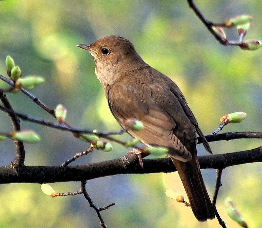 Visiting Nightingale