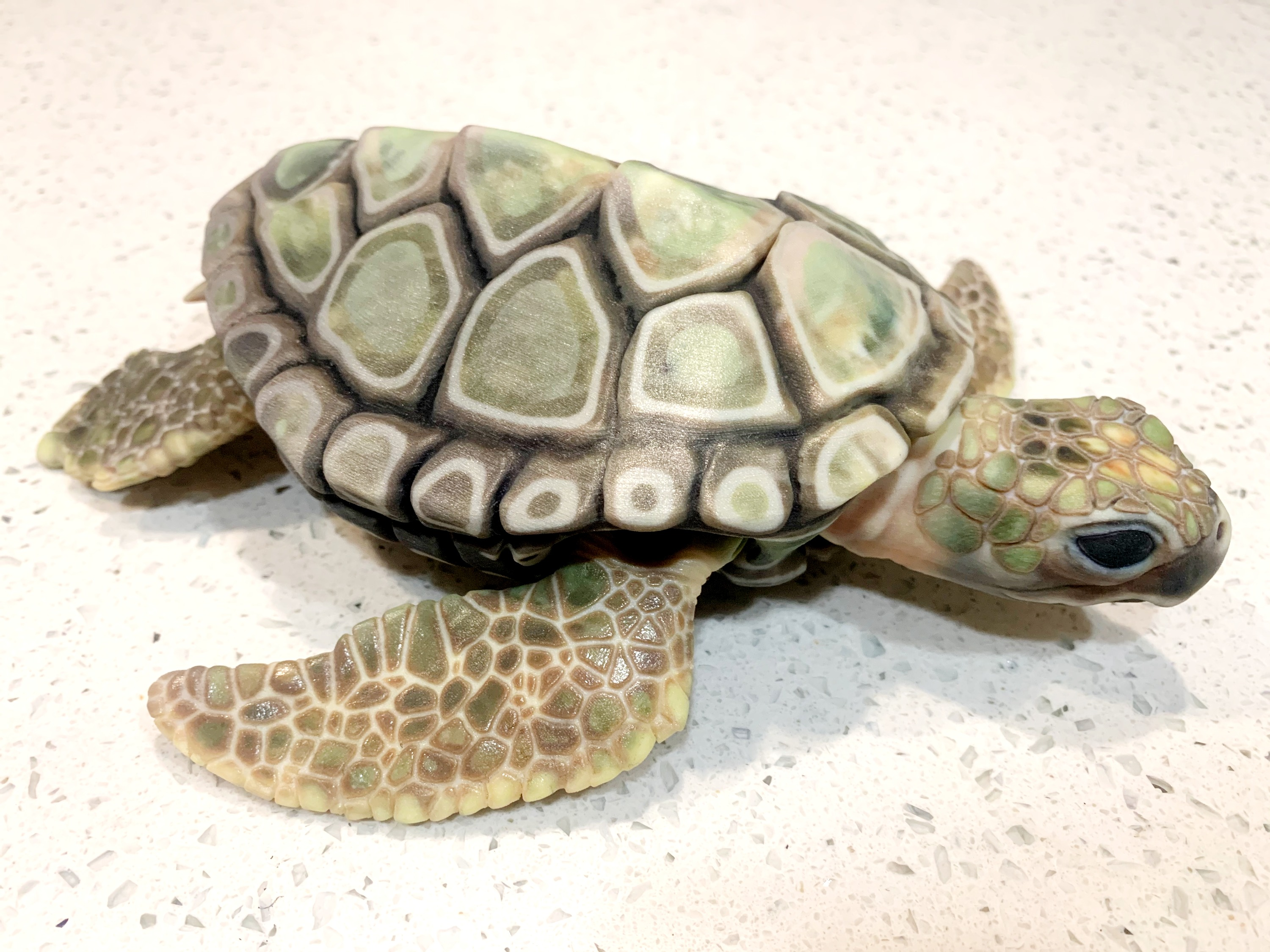 Articulated Sea Turtle