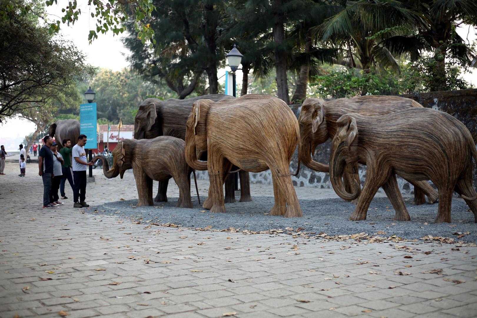 TREC at Fort Kochi (2).jpg