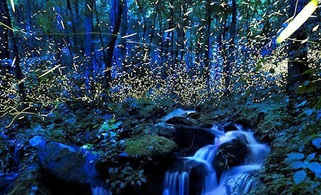 Smoky Mountains Firefly Show