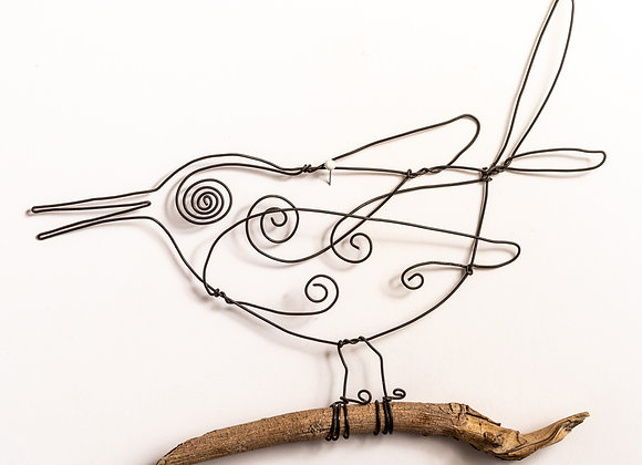 ציפור זנב קופץ