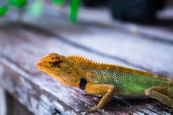Lizard on my seat