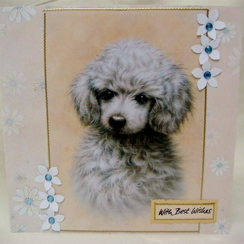 Poodle 'Best Wishes' (PBWGC)