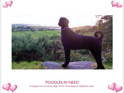 'Poodles In Need' 2013 Calendar (2013CAL)
