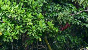Des-conéctate en la Amazonía: Un paraíso en Ecuador