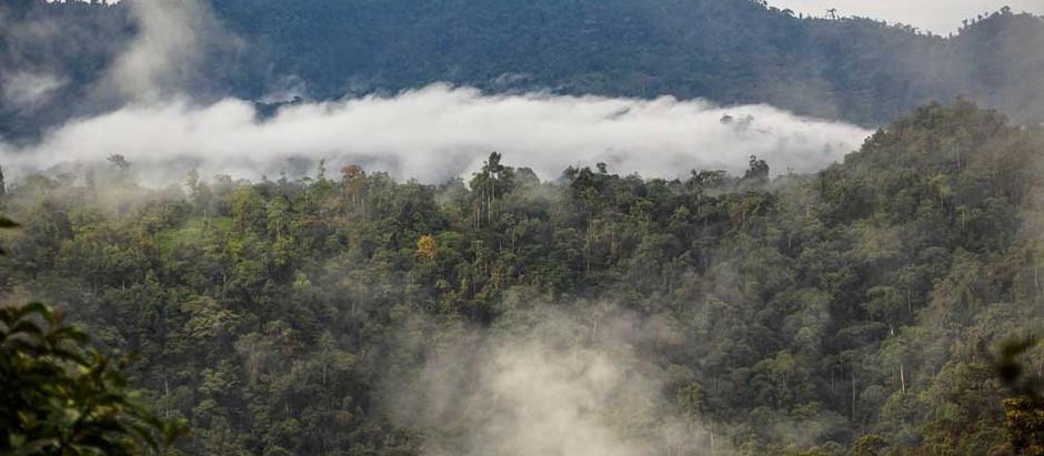 Un baño de naturaleza y miles de aves en la Reserva Pachijal