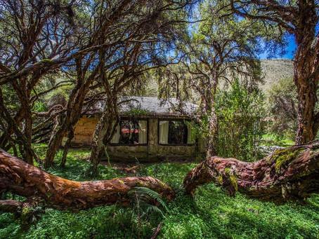 Descubre el bosque milenario del árbol de papel en el Polylepis Lodge