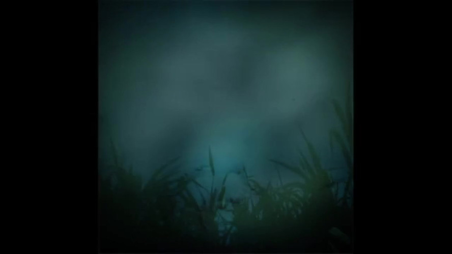 Tall Grass Projection
