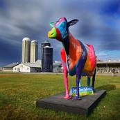 Vache: Courte Pointe