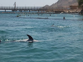 Eilat- Dolphin II.JPG