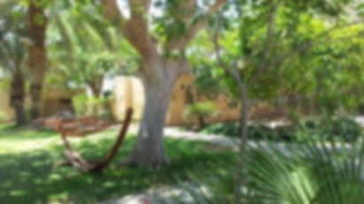 Kibbutz Eilot neu.jpg