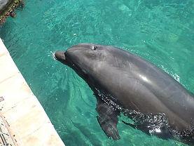 Eilat-Dolphin.JPG