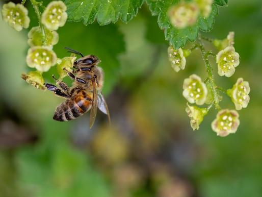Senadora Maritza Martínez presentó proyecto de ley para garantizar la protección de las abejas