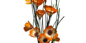 41046 6 Stem Tangerine California Poppy