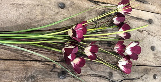 6 Stem Mag Flower Branches