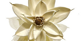 41050 White 4 inch Magnolia Magnet