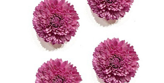 Set of 4 Pale Pink 4 inch Dahlia Magnet
