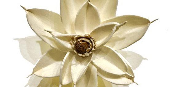 White 4 inch Magnolia Magnet