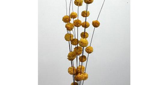 10 Stem/30- 1 GOLD Heads Kadam Blossom Drop-in Bou