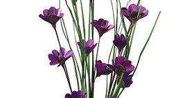 41099 6 Stem Violet Poppy