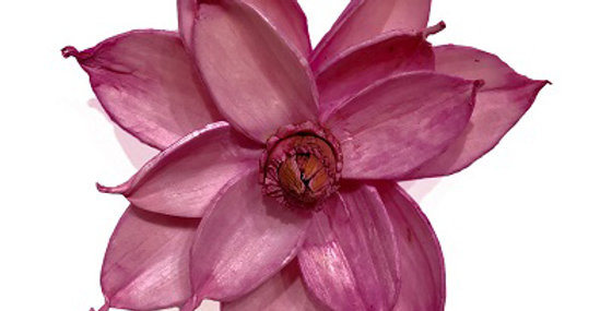 Pink 4 inch Magnolia Magnet