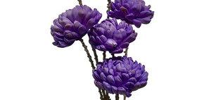 41016 6 Stem Chrysanthemum Flower Branches - Lavender
