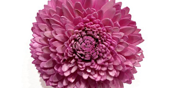 Pale Pink 4 inch Dahlia Magnet