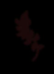 feuillage noir.png