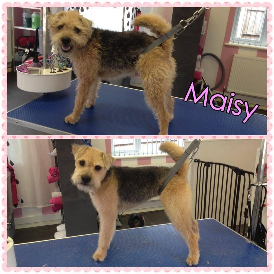 Maisy - JRT X