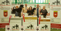 3rd Place in the Poodle Open Class