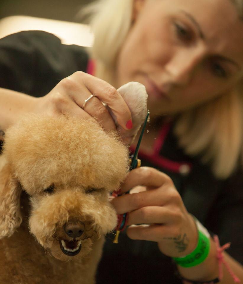 Cutting around Teddys ear