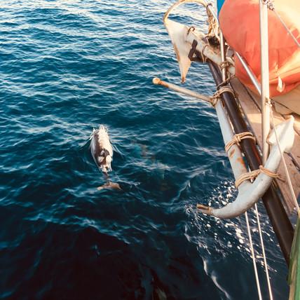 papagei-dauphins.jpg